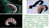 螢火蟲(台灣窗螢)的世界-壽豐雲山水自然生態農莊:螢火蟲的世界-04.jpg