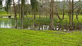 2008/2/20 鳶尾的歸宿:P1060817.jpg