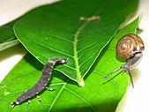 螢火蟲(台灣窗螢)的世界-壽豐雲山水自然生態農莊:DSC05180.jpg