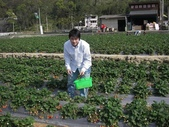 ♡苗栗採草莓♡:1793016744.jpg