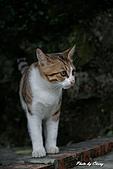 貓村:DSC04328.jpg
