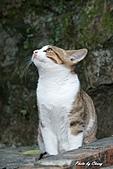 貓村:DSC04329.jpg