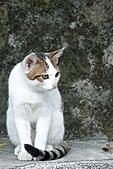 貓村:DSC04331.jpg