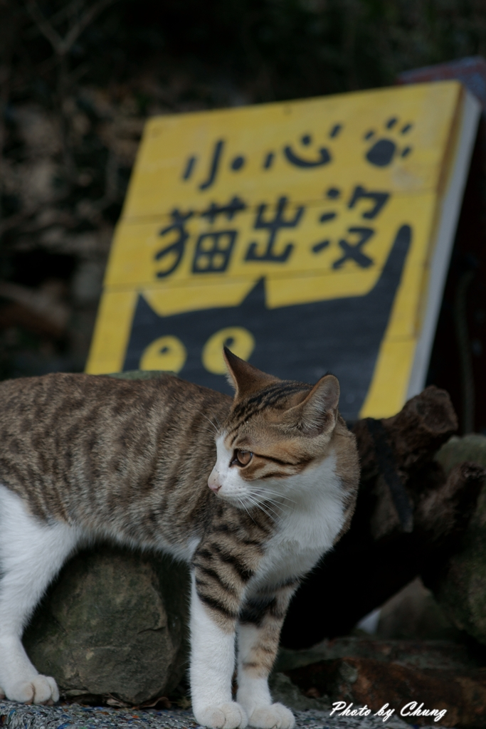 貓村:DSC04340.jpg