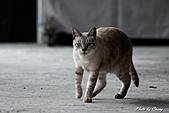 貓村:DSC04450.jpg