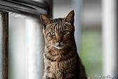 貓村:DSC04480.jpg