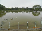 台中大肚山脈:都會公園生態湖