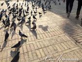 2019Amazing!穿越古絲路上的中亞五國之旅(8-3)--塔吉克斯坦之謝赫‧穆斯里希丁陵墓:08●腳步一經過,便惹來謝赫‧穆斯里希丁陵墓 Sheikh Muslihiddin mausoleum前的鴿群一陣飛舞.JPG