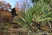 ●一歲一枯榮,向島百花園內的草木只是蓄勢待發,並非死去:DSC08165.JPG