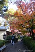 紅葉飄飄15日東京自由行--大田黑公園:24●圍繞池邊的散步道,讓人流漣忘返.JPG