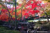 紅葉飄飄15日東京自由行--大田黑公園:13●秋的紅葉,將池畔點綴到近乎夢幻的境界.JPG
