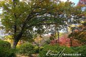 紅葉飄飄15日東京自由行--日比谷公園 :18●充滿自然靈性的公園,難以用言語形容的美麗.JPG