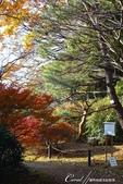 紅葉飄飄15日東京自由行--我在小石川植物園:07●朝著指標方向,踏著石階,穿過與上半場風情截然不同的林蔭,前往日式庭園.JPG