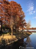紅葉飄飄15日東京自由行--水光雲影、秋色無邊的水元公園:20●水岸邊的水杉、北美楓香、落羽松...層層疊疊佈成高大壯麗的景象,讓我一圓兒時的拼圖之夢00.JPG