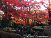大田黑公園內的美麗楓情畫:IMG_2880.JPG