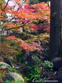 大田黑公園內的美麗楓情畫:IMG_2917.JPG