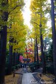 大田黑公園入口處長長的銀杏並木道:04.JPG