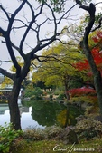 紅葉飄飄15日東京自由行--清澄庭園:34●有那麼一絲像童話森林的畫面.JPG