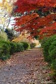 紅葉飄飄15日東京自由行--閃耀著童話森林般迷人色彩的小石川植物園:09●決定先跳過,像似通往秘境一般的深長小徑.JPG