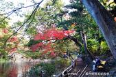 紅葉飄飄15日東京自由行--井之頭恩賜公園:14●湖水、步道、與紅葉所交織成的獨特景色,隨處所至皆有不同意趣.JPG