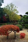 紅葉飄飄15日東京自由行--清澄庭園斑瀾的秋色:05.JPG