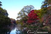紅葉飄飄15日東京自由行--井之頭恩賜公園:16●湖水、步道、與紅葉所交織成的獨特景色,隨處所至皆有不同意趣.JPG