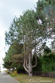 2019Amazing!穿越古絲路上的中亞五國之旅(4-5)--吉爾吉斯斯坦之伊塞克湖渡假村:06●迎賓大道的盡頭即是伊塞克湖,樹蔭間透出的亮光,引領大家走向湖光山色的舞台.JPG