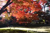 紅葉飄飄15日東京自由行--大田黑公園:23●圍繞池邊的散步道,讓人流漣忘返.JPG