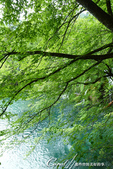 2018不思議之克、斯、義秘境歐遊記(3~1)--陽光穿過樹梢,在水面畫下翦影:12.JPG
