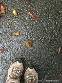 萍水相逢˙有志一同--初秋記遊之神鍋高原:●走著走著,一顆栗子掉落眼前,預告秋天將至的自然訊息。.JPG