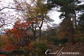紅葉飄飄15日東京自由行--御岳山:●幾株紅葉點綴了山間的部份路段01.JPG