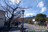 紅葉飄飄15日東京自由行--寶登山尋寶趣:03●沿路兩側的枯樹帶來十足的秋的意境.JPG