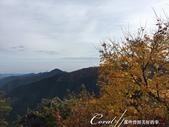 紅葉飄飄15日東京自由行--御岳山:●又登高了些。理所當然景緻也更美了02.JPG