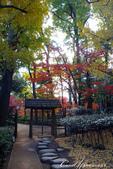 大田黑公園入口處長長的銀杏並木道:07.JPG