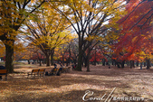 紅葉飄飄15日東京自由行--代代木公園:14●沿著噴水池漫走,每個角度都有超越想像的夢幻美景.JPG
