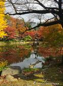 紅葉飄飄15日東京自由行--日比谷公園之美不勝收雲形池:●秋詩篇篇;如此這般.JPG