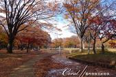 紅葉飄飄15日東京自由行--代代木公園:16●沿著噴水池漫走,每個角度都有超越想像的夢幻美景.JPG