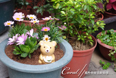 ●捻花惹草趣:自由女神的花園-歡迎小熊與它的新朋友.jpg