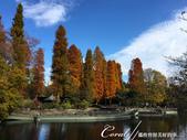 紅葉飄飄15日東京自由行--井之頭恩賜公園:08●從林間小徑,赫然轉折出一副副無與倫比的池畔美景.JPG