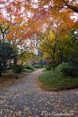 紅葉飄飄15日東京自由行--日比谷公園 :24●充滿自然靈性的公園,難以用言語形容的美麗.JPG