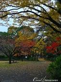 紅葉飄飄15日東京自由行--清澄庭園:38●有那麼一絲像童話森林的畫面.JPG