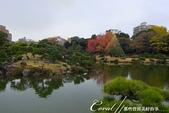紅葉飄飄15日東京自由行--清澄庭園:27●欣賞池中的魚、水上的鴨和倒映在水中的樹,是來此庭園的一大樂事06.JPG