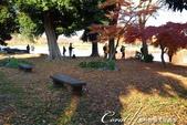 紅葉飄飄15日東京自由行--水光雲影、秋色無邊的水元公園:10●累了;坐下歇息,累了;坐下歇息,林間的氣氛令人感到恬靜舒適,彷彿時光靜止一般02.JPG
