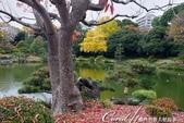 紅葉飄飄15日東京自由行--清澄庭園一眼看不完的池畔風情:10.JPG