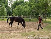 2019Amazing!穿越古絲路上的中亞五國之旅(11-)--土庫曼斯坦之汗血寶馬:01●古代傳說中,有一種體態優美、飛奔如箭、皮毛細緻油亮,被稱作汗血馬的馬種.JPG