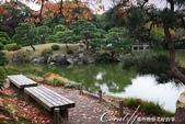 紅葉飄飄15日東京自由行--清澄庭園斑瀾的秋色:10.JPG
