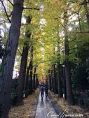 2019Amazing!穿越古絲路上的中亞五國之旅(8-3)--塔吉克斯坦之謝赫‧穆斯里希丁陵墓:05●庭院深深深幾許,走在長長的銀杏並木道,特別有種詩意上心頭的美感.JPG