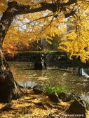 紅葉飄飄15日東京自由行--日比谷公園之美不勝收雲形池:●鶴の噴水前,黃葉低垂,景緻美到令人不敢置信.JPG