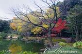 紅葉飄飄15日東京自由行--清澄庭園斑瀾的秋色:04.JPG