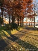 紅葉飄飄15日東京自由行--水光雲影、秋色無邊的水元公園:20●水岸邊的水杉、北美楓香、落羽松...層層疊疊佈成高大壯麗的景象,讓我一圓兒時的拼圖之夢04.JPG